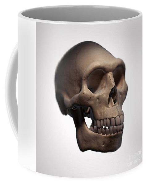 Digitally Generated Image Coffee Mug featuring the photograph Homo Erectus Skull by Science Picture Co