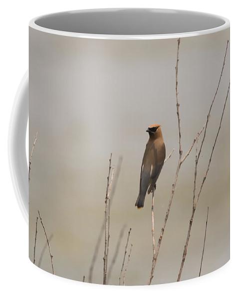Cedar Waxwing Coffee Mug featuring the photograph Looking Back by Linda Kerkau