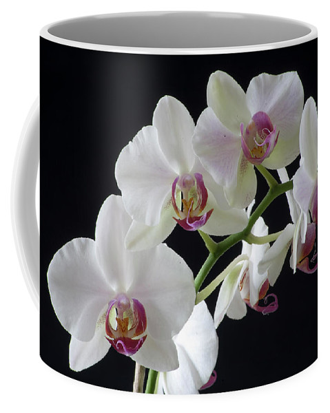 Orchids Coffee Mug featuring the photograph Orchids by Bruce Beck