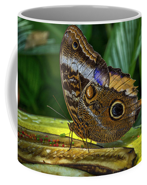 Florida Coffee Mug featuring the photograph 5113- Butterfly by David Lange