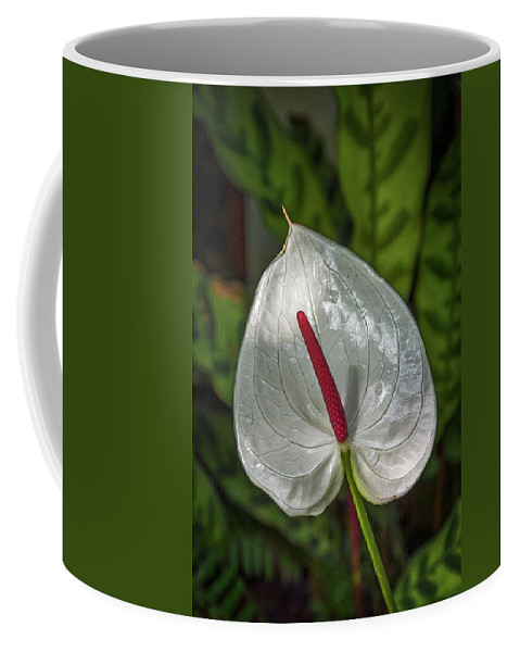 Florida Coffee Mug featuring the photograph 5129- Flower by David Lange