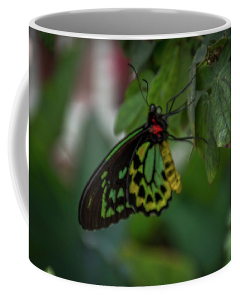 Florida Coffee Mug featuring the photograph 5156- Butterfly by David Lange