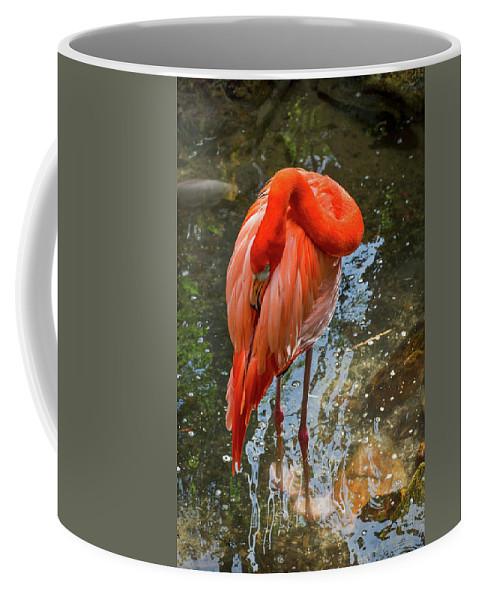 Flamingo Coffee Mug featuring the photograph 5182- Flamingo by David Lange