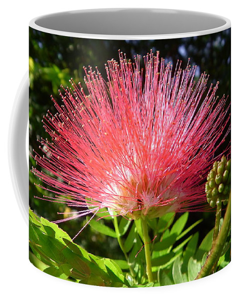 Australia Coffee Mug featuring the photograph Australia - Caliandra Red Flower by Jeffrey Shaw