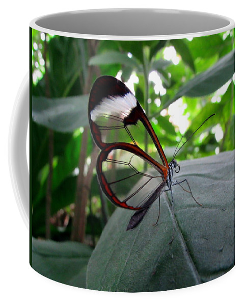 Butterfly Coffee Mug featuring the photograph Butterfly by Cesar Vieira