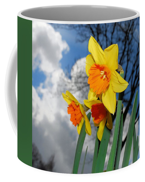 Daffodil Coffee Mug featuring the photograph Daffodils by FL collection