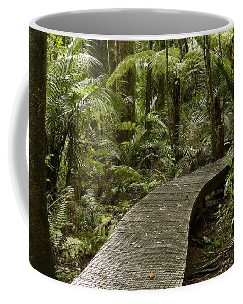 Rain Forest Coffee Mug featuring the photograph Forest Boardwalk by Les Cunliffe