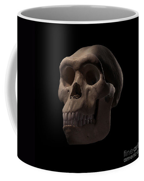 Digitally Generated Image Coffee Mug featuring the photograph Homo Habilis Skull by Science Picture Co