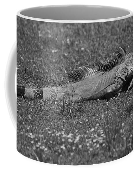 Sun Coffee Mug featuring the photograph I Iguana by Rob Hans