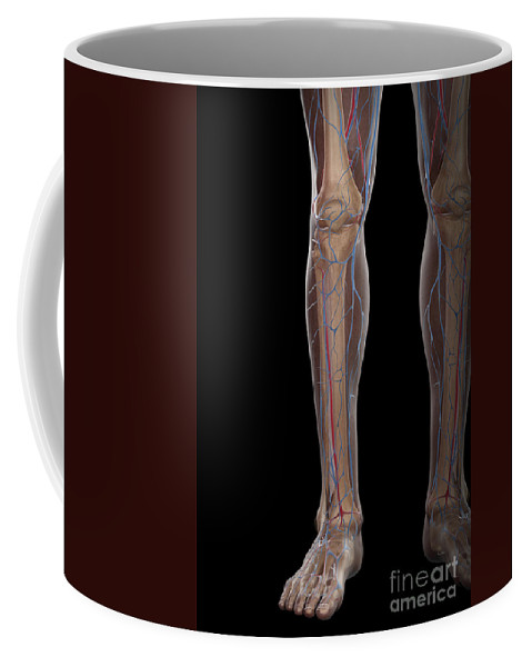 Digitally Generated Image Coffee Mug featuring the photograph Leg Blood Supply by Science Picture Co