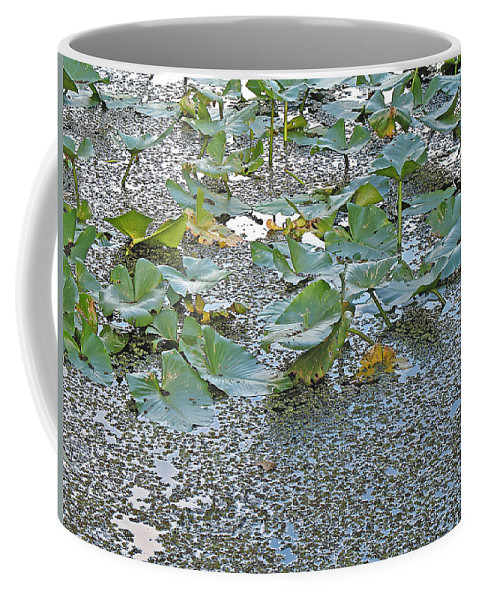 Swamp Coffee Mug featuring the photograph 6 Mile Swamp by Kenneth Albin