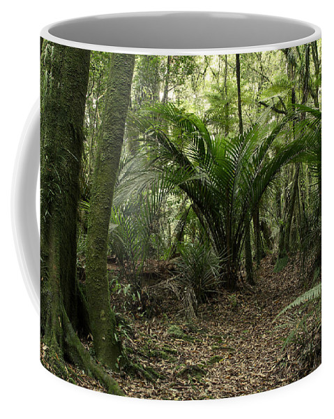 Rain Forest Coffee Mug featuring the photograph Tropical Jungle by Les Cunliffe