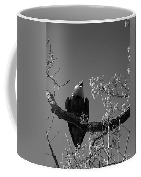 Eagle Coffee Mug featuring the photograph Bald Eagle by Michael Tucker