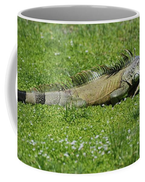 Macro Coffee Mug featuring the photograph I Iguana by Rob Hans