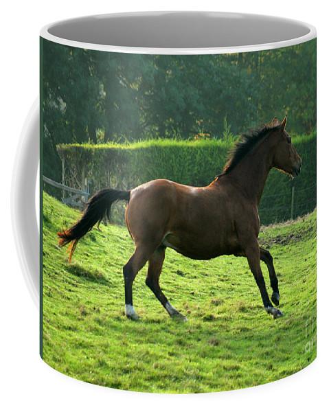 Horse Coffee Mug featuring the photograph The Bay Horse by Angel Tarantella