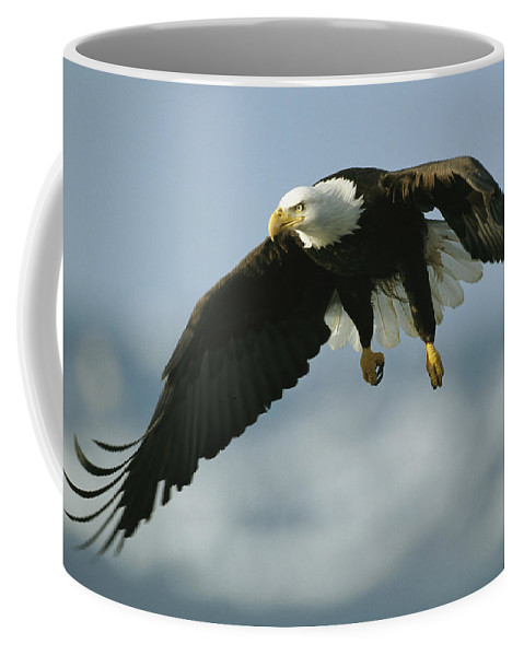 Animals Coffee Mug featuring the photograph An American Bald Eagle In Flight by Klaus Nigge