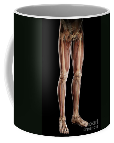 Digitally Generated Image Coffee Mug featuring the photograph Leg Musculature by Science Picture Co