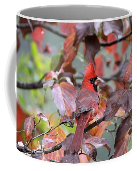 Northern Cardinal Coffee Mug featuring the photograph 8623-001 - Northern Cardinal by Travis Truelove