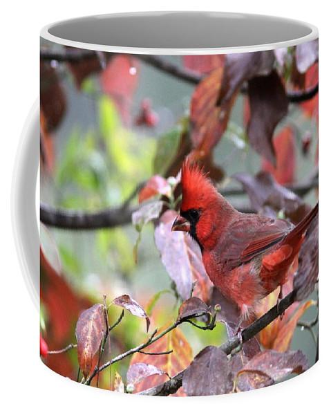 Northern Cardinal Coffee Mug featuring the photograph 8627-002 - Northern Cardinal by Travis Truelove
