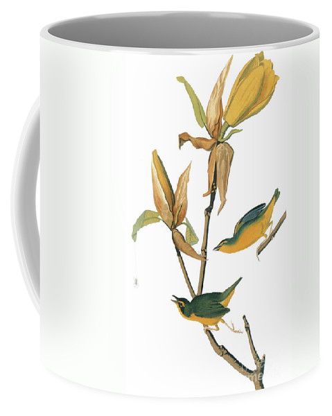 1827 Coffee Mug featuring the photograph Audubon: Warbler by Granger