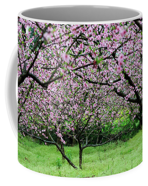 Peach Flowers Coffee Mug featuring the photograph Blossoming Peach Flowers In Spring by Carl Ning