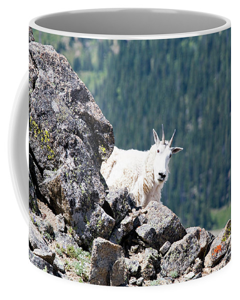 Mount Massive Coffee Mug featuring the photograph Hiking The Mount Massive Summit by Steve Krull