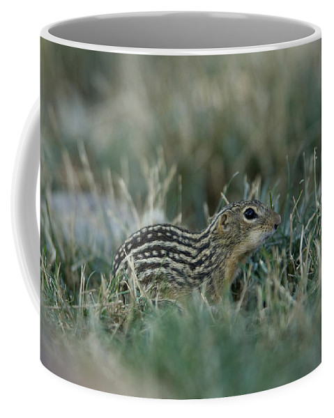 Photography Coffee Mug featuring the photograph A 13-lined Ground Squirrel At The Henry by Joel Sartore