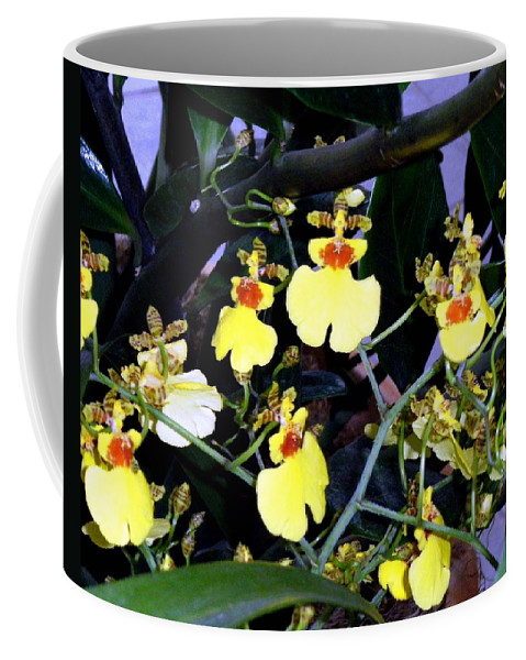 Orchids Coffee Mug featuring the photograph A Ballet Of Tiny Orchids by Mindy Newman