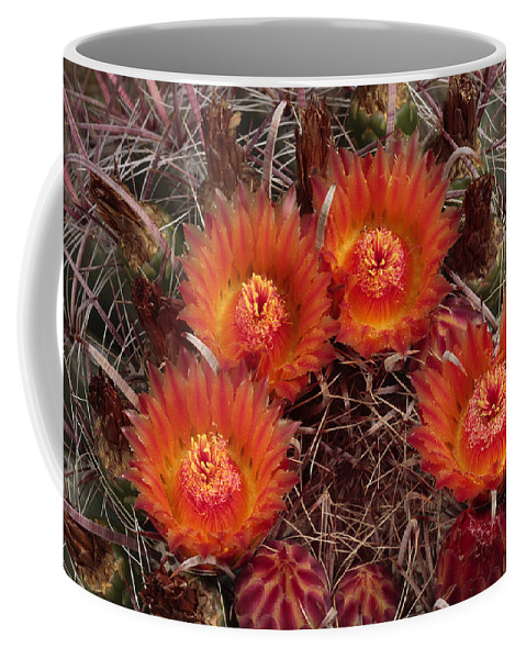 Arizona Coffee Mug featuring the photograph A Barrel Cactus Is Blooming by George Grall