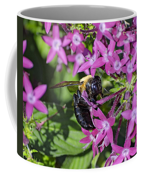 Bee Coffee Mug featuring the photograph A Bee See by Kenneth Albin