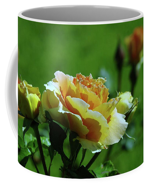 Roses Coffee Mug featuring the photograph A Benton City Rose by Jeff Swan