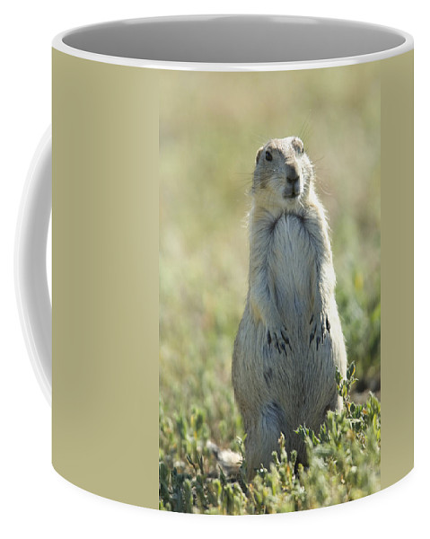 Photography Coffee Mug featuring the photograph A Black-tailed Prairie Dog In Montana by Joel Sartore