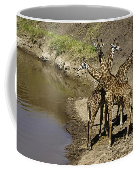 Africa Coffee Mug featuring the photograph A Bouquet Of Giraffes by Michele Burgess