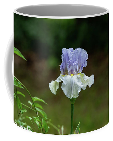 Violet Coffee Mug featuring the photograph A Bright Day by James Breedlove
