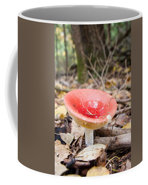 Laurentian Mountains Coffee Mug featuring the photograph A Bright Red Mushroom Blooms by Taylor S. Kennedy