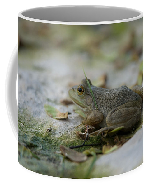 Photography Coffee Mug featuring the photograph A Bullfrog At The Sunset Zoo by Joel Sartore
