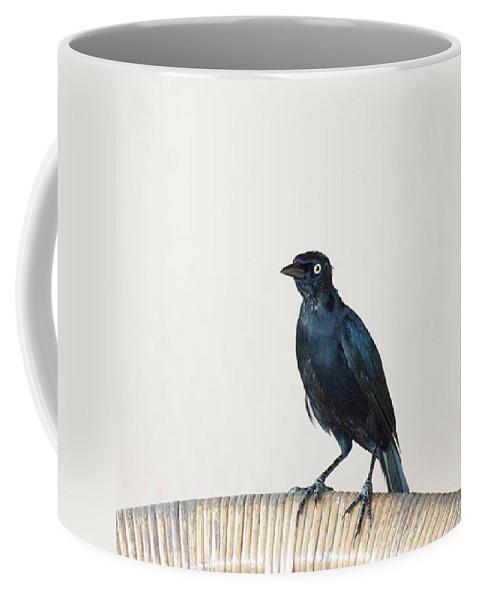 Caribgrackle Coffee Mug featuring the photograph A Carib Grackle (quiscalus Lugubris) On by John Edwards