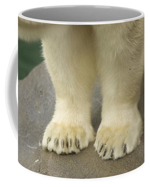 Photography Coffee Mug featuring the photograph A Close-up Of A Juvenile Polar Bear by Joel Sartore