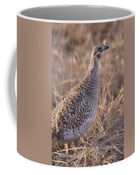 Nobody Coffee Mug featuring the photograph A Close-up Of A Sharptail Grouse by Joel Sartore