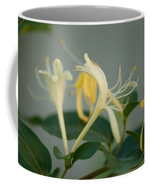 Nobody Coffee Mug featuring the photograph A Close Up Of Honeysuckle by Joel Sartore