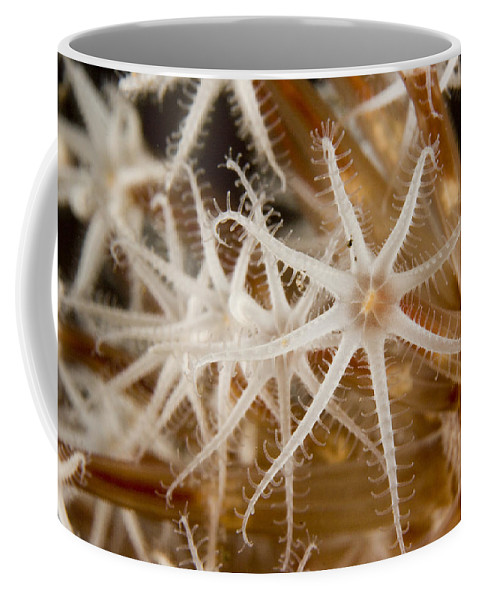 Closeups Coffee Mug featuring the photograph A Closeup View Of Coral Polyps by Tim Laman
