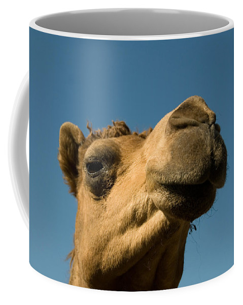 Dromedary Camel Coffee Mug featuring the photograph A Dromedary Camel At The Lincoln by Joel Sartore