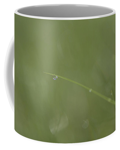 Quebec Coffee Mug featuring the photograph A Drop Of Dew Dangles From The End by Taylor S. Kennedy