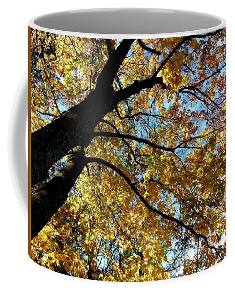 Autumn Coffee Mug featuring the photograph A Falling Maple Leaf by Will Borden