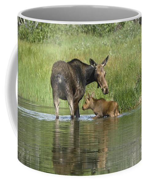 Grand Teton Coffee Mug featuring the photograph A Family Affair by Sandra Bronstein