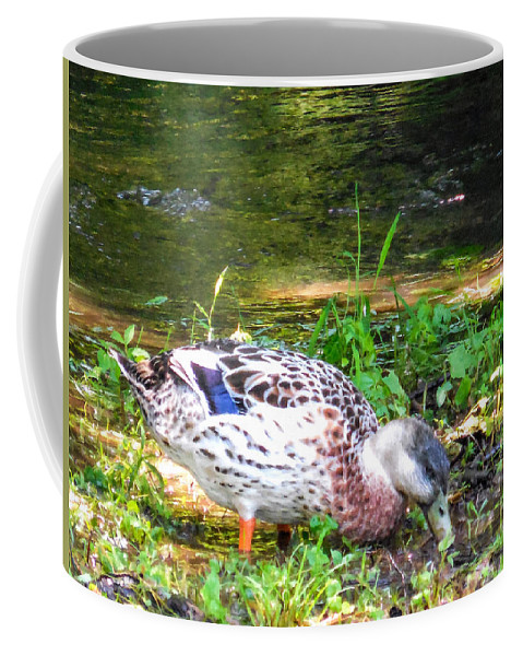 Beak Coffee Mug featuring the painting A Female Mallard Duck Is See Searching For Food 1 by Jeelan Clark