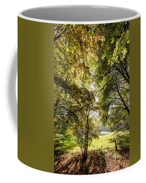 Forest Coffee Mug featuring the photograph a Forest part 2 by Alex Hiemstra