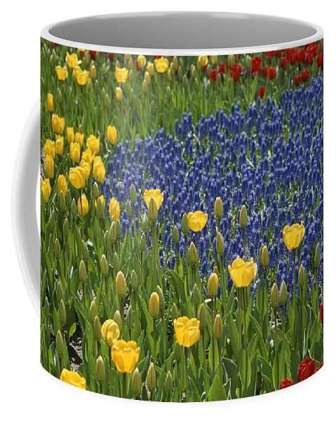 Plants Coffee Mug featuring the photograph A Garden Of Colorful Tulips And Grape by Raul Touzon