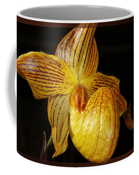 Orchid Coffee Mug featuring the photograph A Golden Slipper by Phyllis Denton
