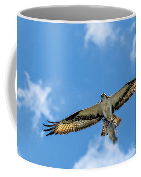 Avian Coffee Mug featuring the photograph A Good Day Fishing by Christopher Holmes